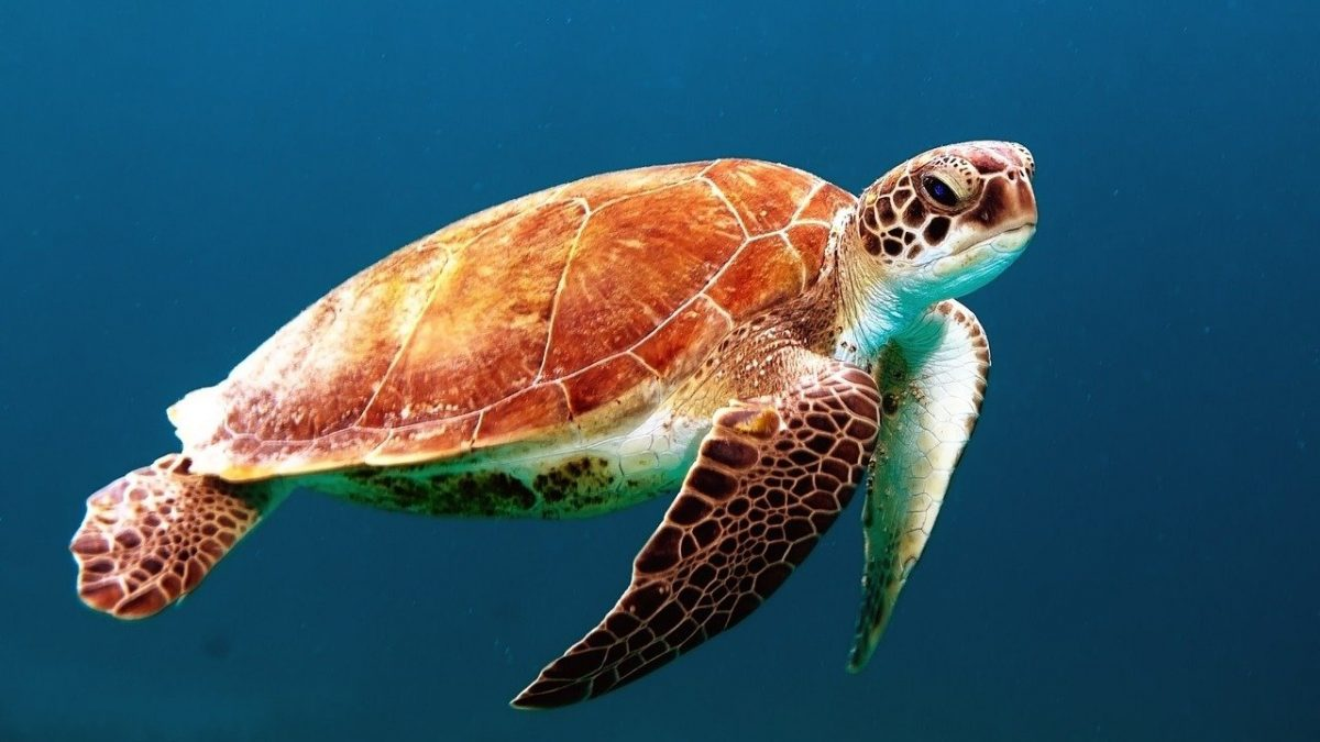Il 4 ottobre: <span>World Animal Day</span>