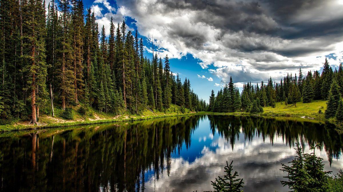 Le Giornate Mondiali della <span>Natura</span>, dell'<span>Acqua</span> e delle <span>Foreste</span>.