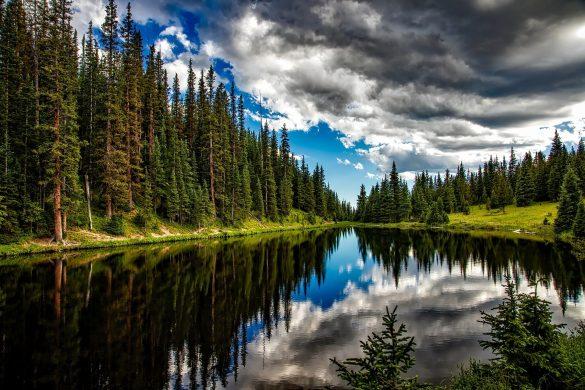 Giornate Mondiali della Natura, dell'acqua e delle Foreste